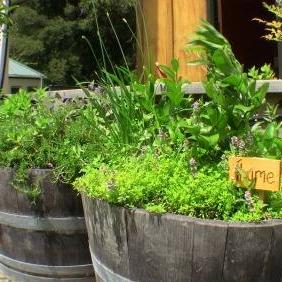 herb garden 1 resized